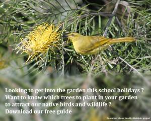Yellow-Honeyeater-Planting-Guide