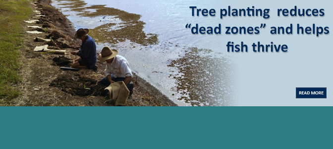 "Tree planting  reduces ""dead zones"""