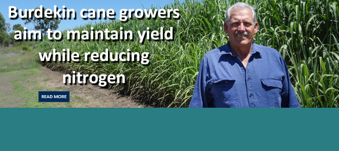 Maintaining yield while reducing nitrogen