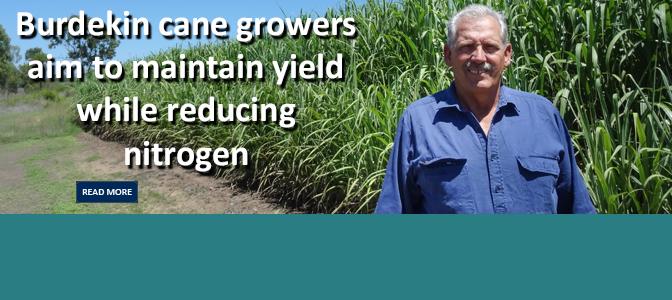 Maintaining yield while reducing nitrogen