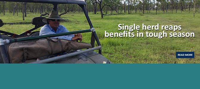 Single herd reaps benefits in tough season
