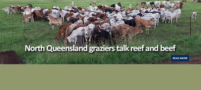 Nth Queensland graziers talk reef & beef