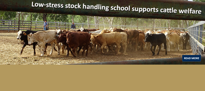Low-stress stock handling school