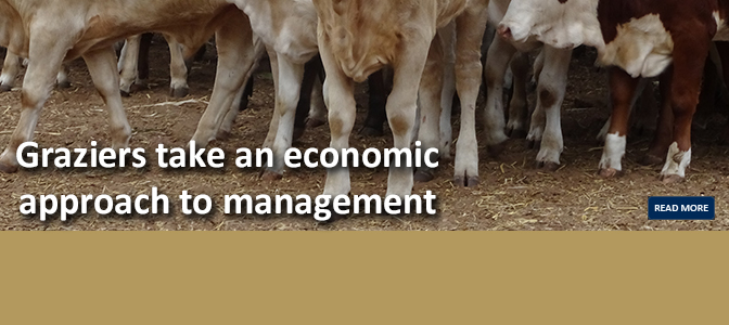 Economic approach to management