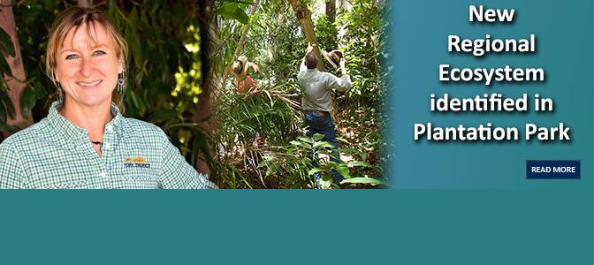 New Regional Ecosystem identified in Plantation Park