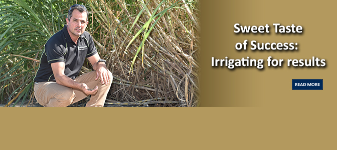 Sweet Taste of Success:  Irrigating for results
