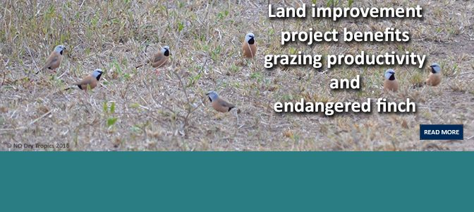 Land improvement project benefits grazing productivity and endangered finch