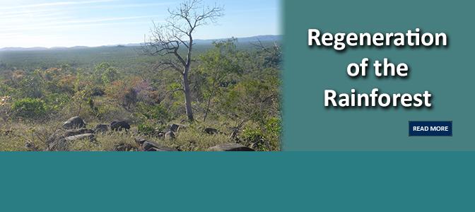 Regeneration of the Rainforest
