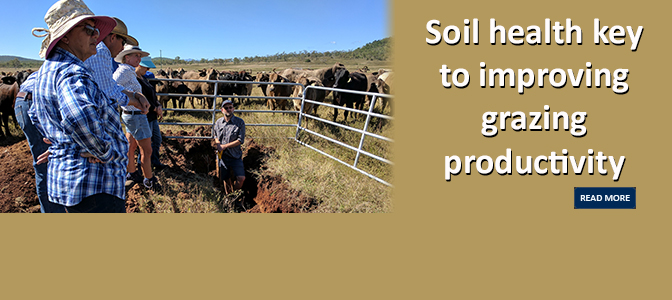 Soil health key to improving grazing productivity