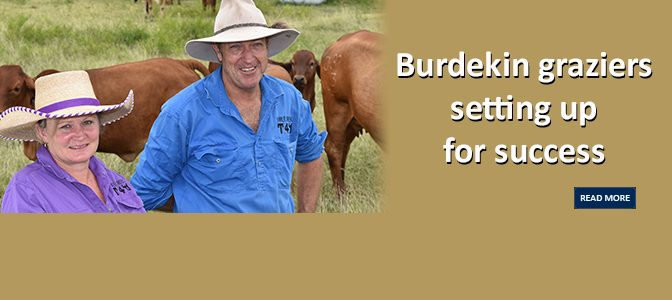 Burdekin graziers setting up for success