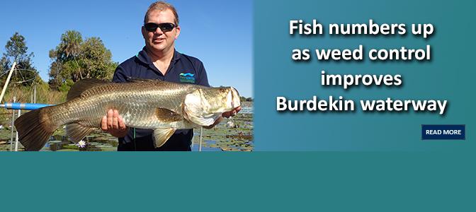 Fish numbers up as weed control improves Burdekin waterway