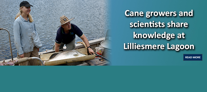 Cane growers and scientists share knowledge at Lilliesmere Lagoon