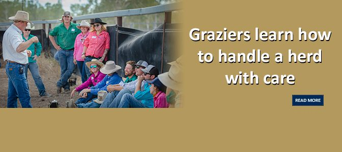 Graziers learn how to handle a herd with care
