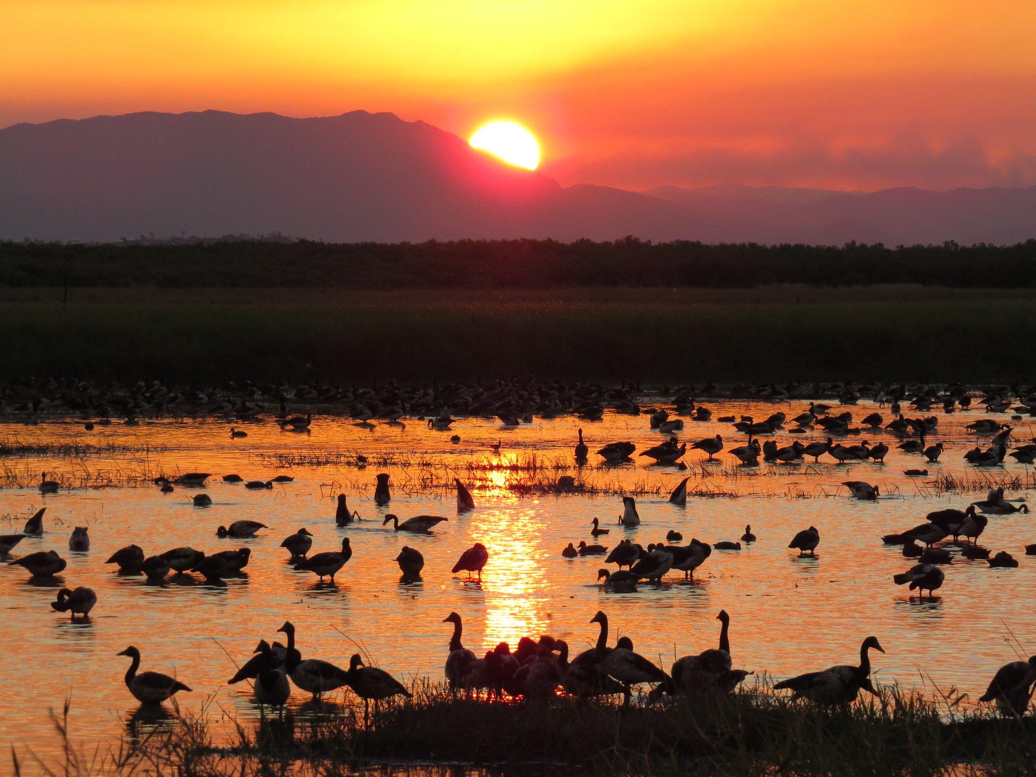 Lower Burdekin Wetlands