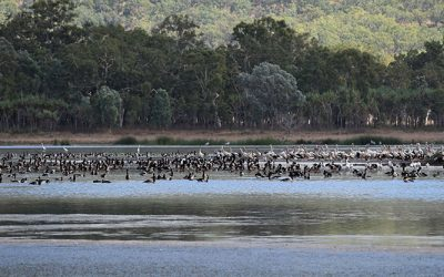 Focus on Lower Burdekin wetlands for World Wetlands Day