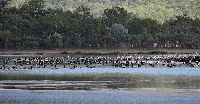 Wongaloo Wetlands
