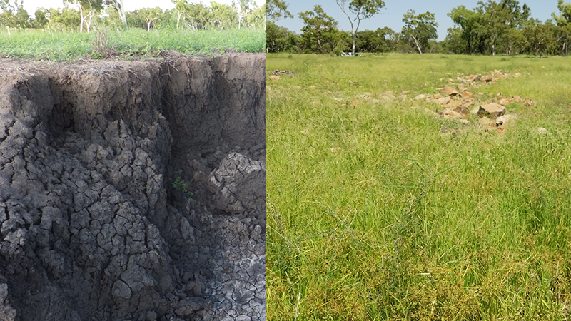 Gully restoration prevents erosion and promotes grass growth