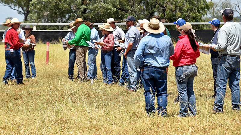 Taking stock – pasture management is key