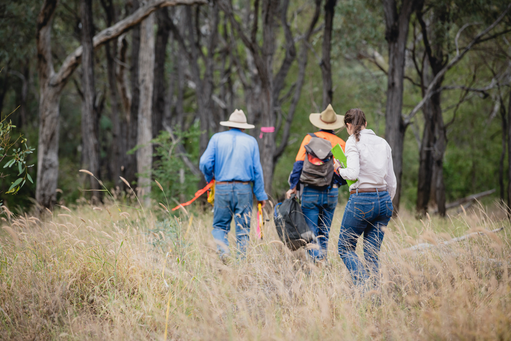 Protecting Brigalow 1