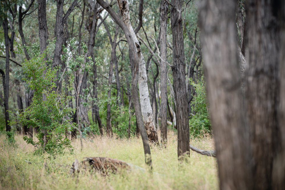 Protecting Brigalow 2