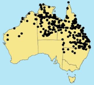 Golden Beard Grass Distribution