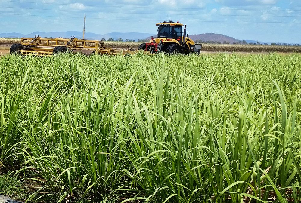 Irrigation improvement funding to support cane growers and the reef