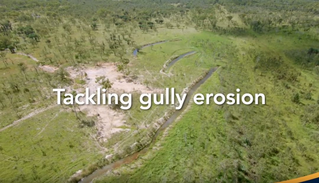 Video outlines range of gully strategies