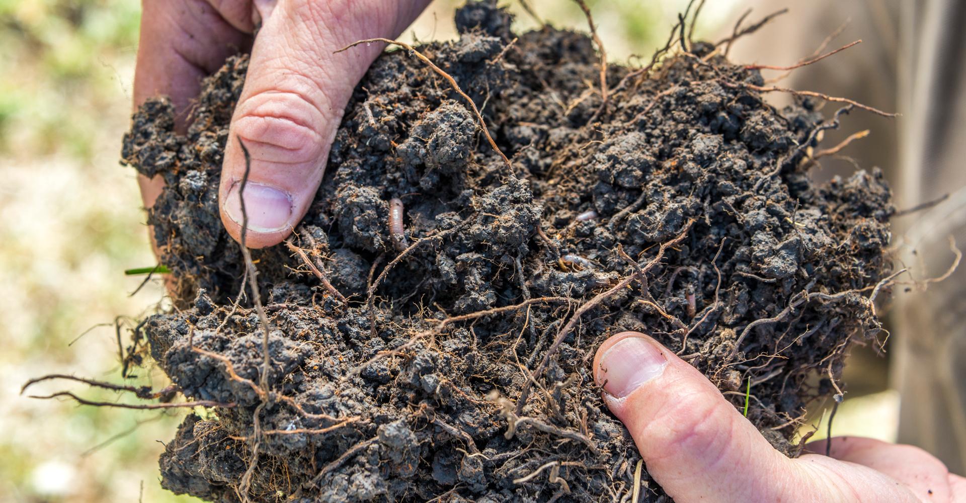 SoilOrganisms