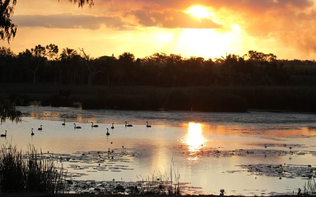 World Wetlands Day: shining a spotlight on our beautiful wetlands