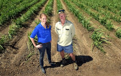 Burdekin growers reduce nitrogen use and maintain yield