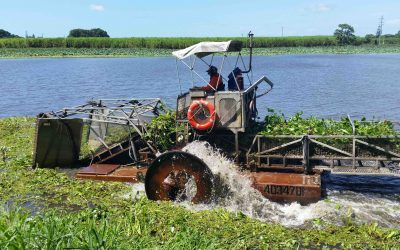 Plantation Creek weed removal works to reduce flood and fire risk