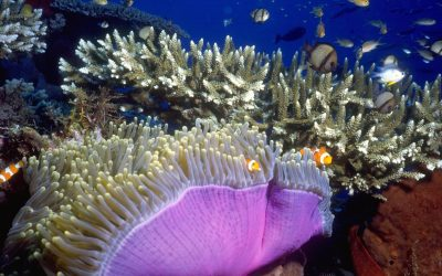Community Action Plans to help prioritise reef protection measures