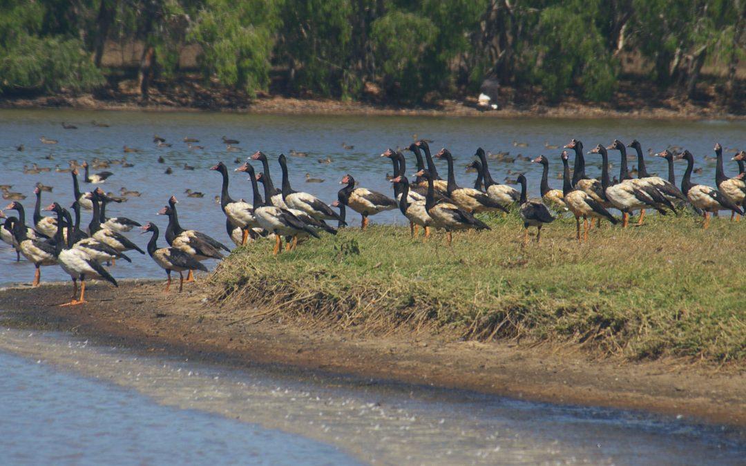 Restoring Bowling Green Bay Wetlands