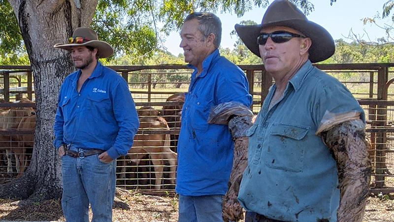 Fine-tuning breeder herds