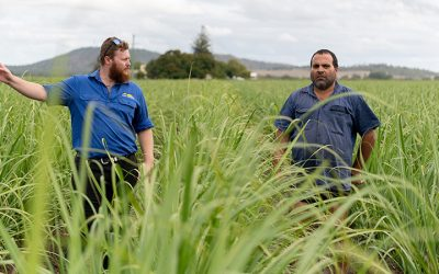 Cane growers improving reef water quality